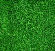 5 Steps to a Lush Lawn