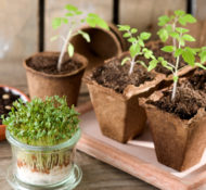 How to Grow a Windowsill Vegetable Garden