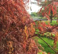 Dealing with Frost Damage