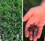 All About Aerating, Why You Should Aerate Your Lawn