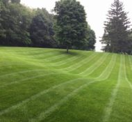 How to Find the Right Lawn Care Service for You