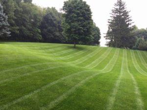 Lawn Landscape Maintenance Naylor Landscape Management
