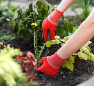 10 Tips to Get Rid of Weeds