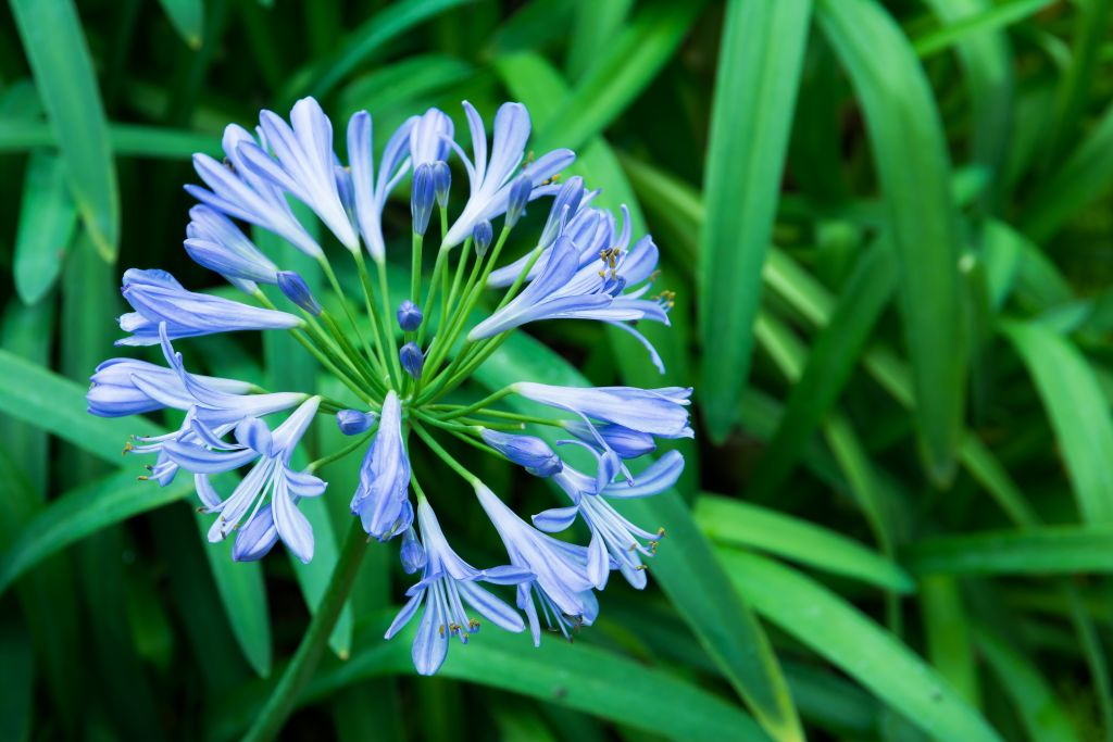 12 plants that beat the summer heat naylor landscape management these low maintenance plants feature evergreen foliage and strong stems bearing beautiful large globes of trumpet shaped flowers that bloom summer through mightylinksfo