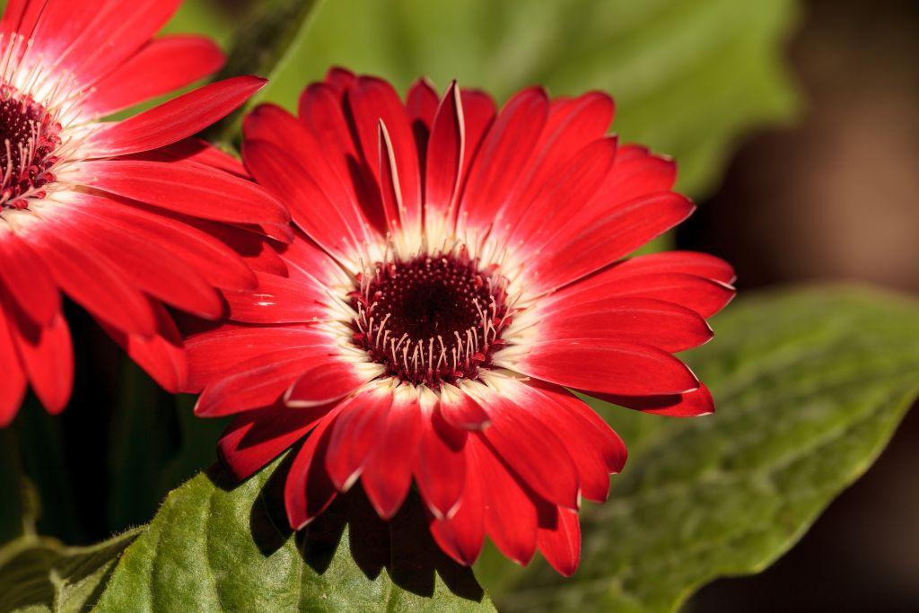 12 Plants that Beat the Summer Heat - Naylor Landscape