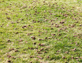 overseeding-aerating-dethatching-landscape-fall