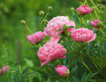 The Hottest Days Of Summer Can Make Your Flowers Fade And Plants Fizzle Have No Fear We Ve Rounded Up A Dozen Varieties That Take Heat