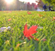 Blog 1 // How to Prepare your Lawn for Fall