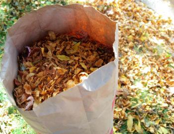 leaf-removal