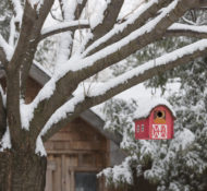 Festive Ways to Feed Birds this Winter